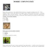 GRA PLANSZOWA POTYCZKI Z BAŻANTEM_08.jpg