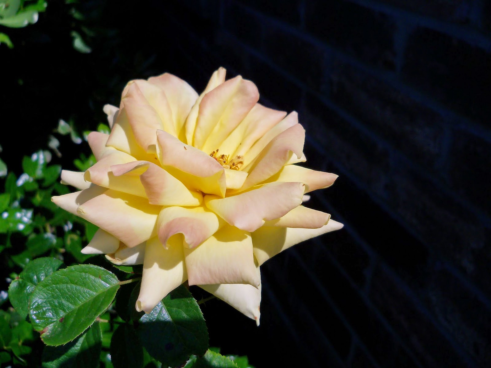 Gardening 2014 - 116_1558.JPG