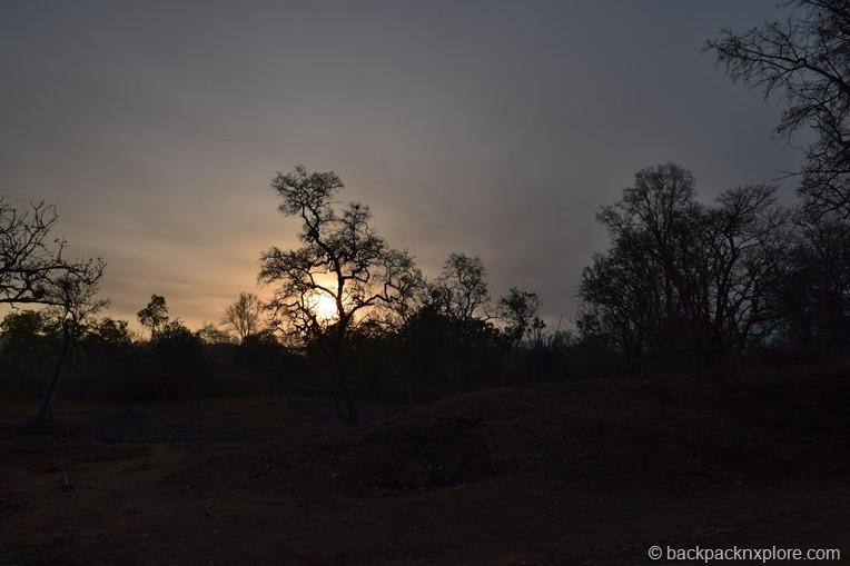 Sunset at Bandipur Natonal Park and Tiger Reserve | Bandipur safari