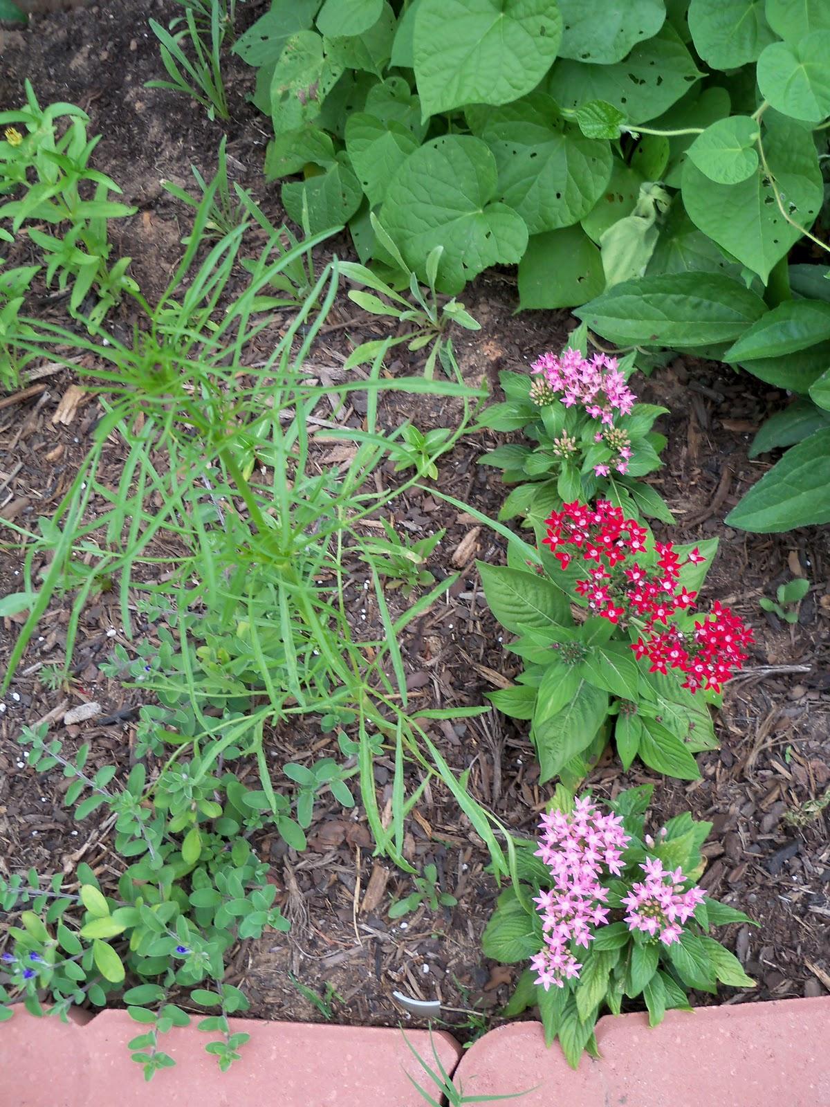 Gardening 2010, Part Two - 101_2945.JPG
