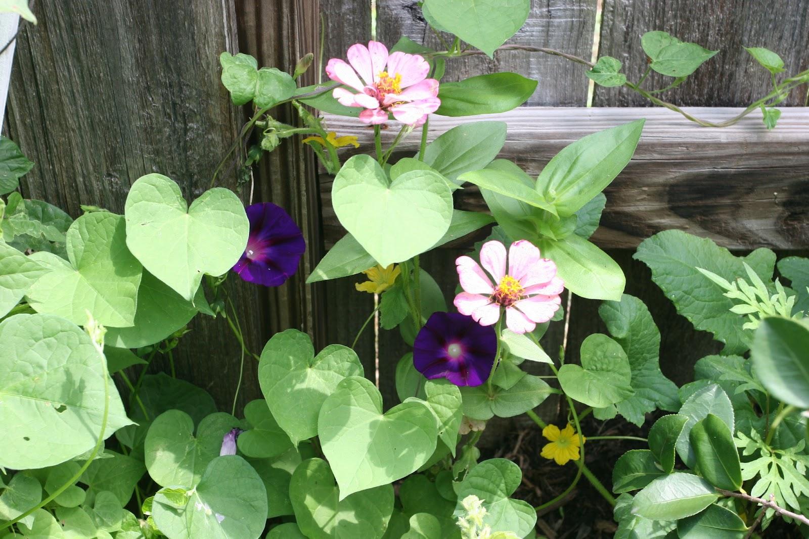 Gardening 2012 - IMG_3754.JPG