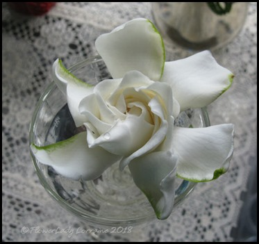 04-21-gardenia4
