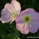 2013 Spring Flora & Fauna - IMGP6334.JPG