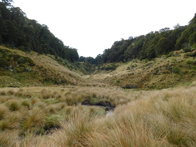 2018-04-13_085734_NZ SI Tableland Circuit_DSCN8140