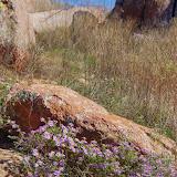 11-09-13 Wichita Mountains Wildlife Refuge - IMGP0382.JPG