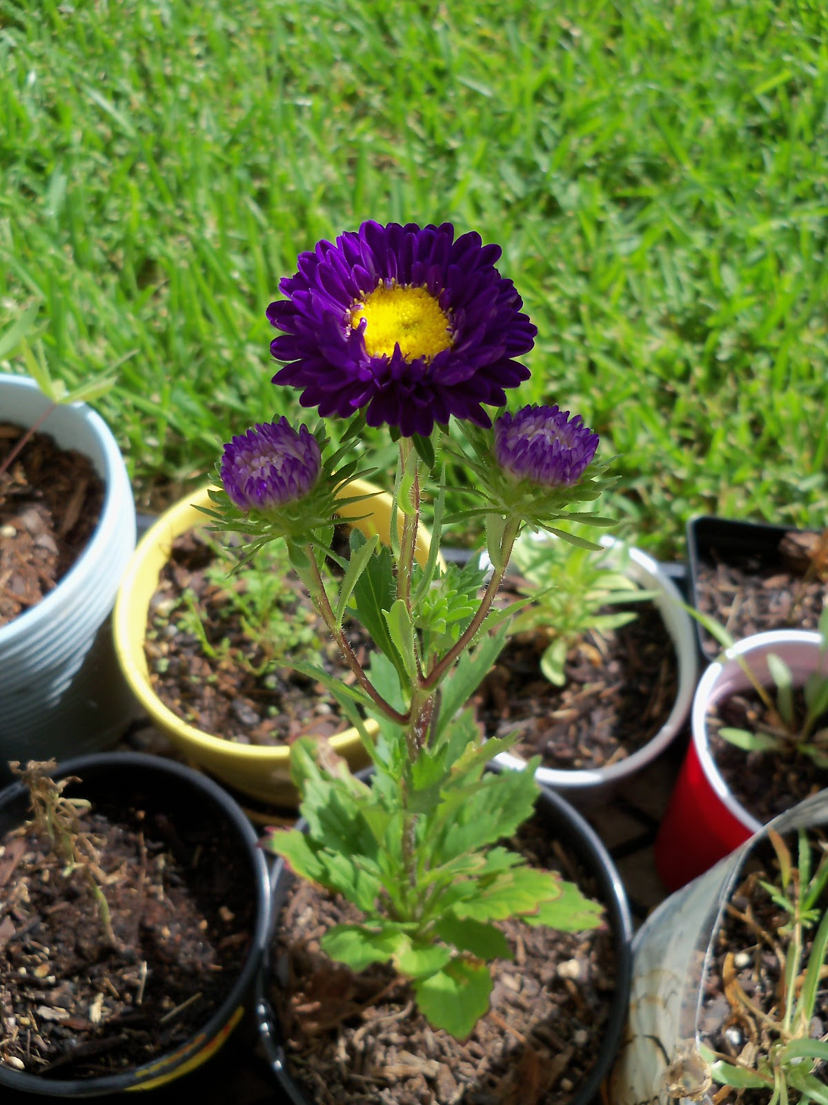 Gardening 2010, Part Three - 101_4986.JPG