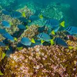 galapagos - Galapagos_FB_2-56.jpg