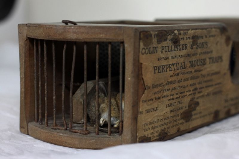 155-year-old-mouse-trap-museum-9