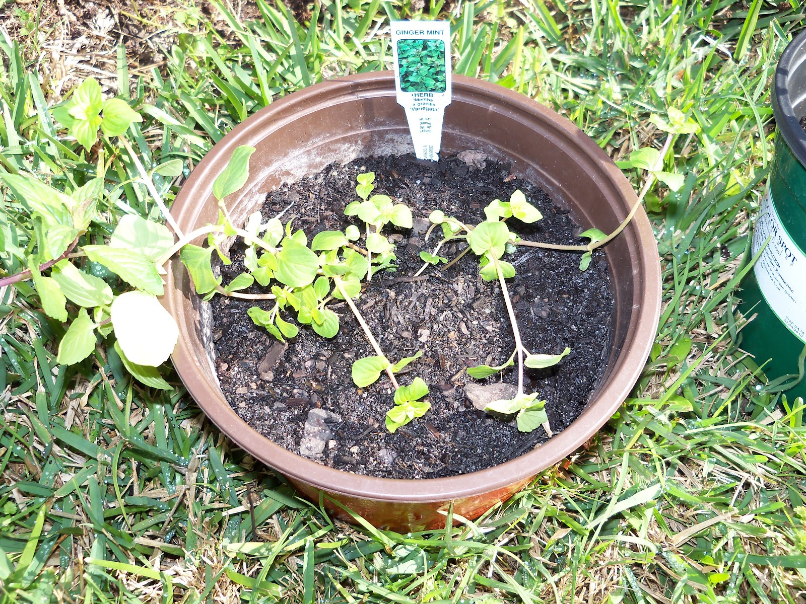 Gardening 2010 - 101_0232.JPG