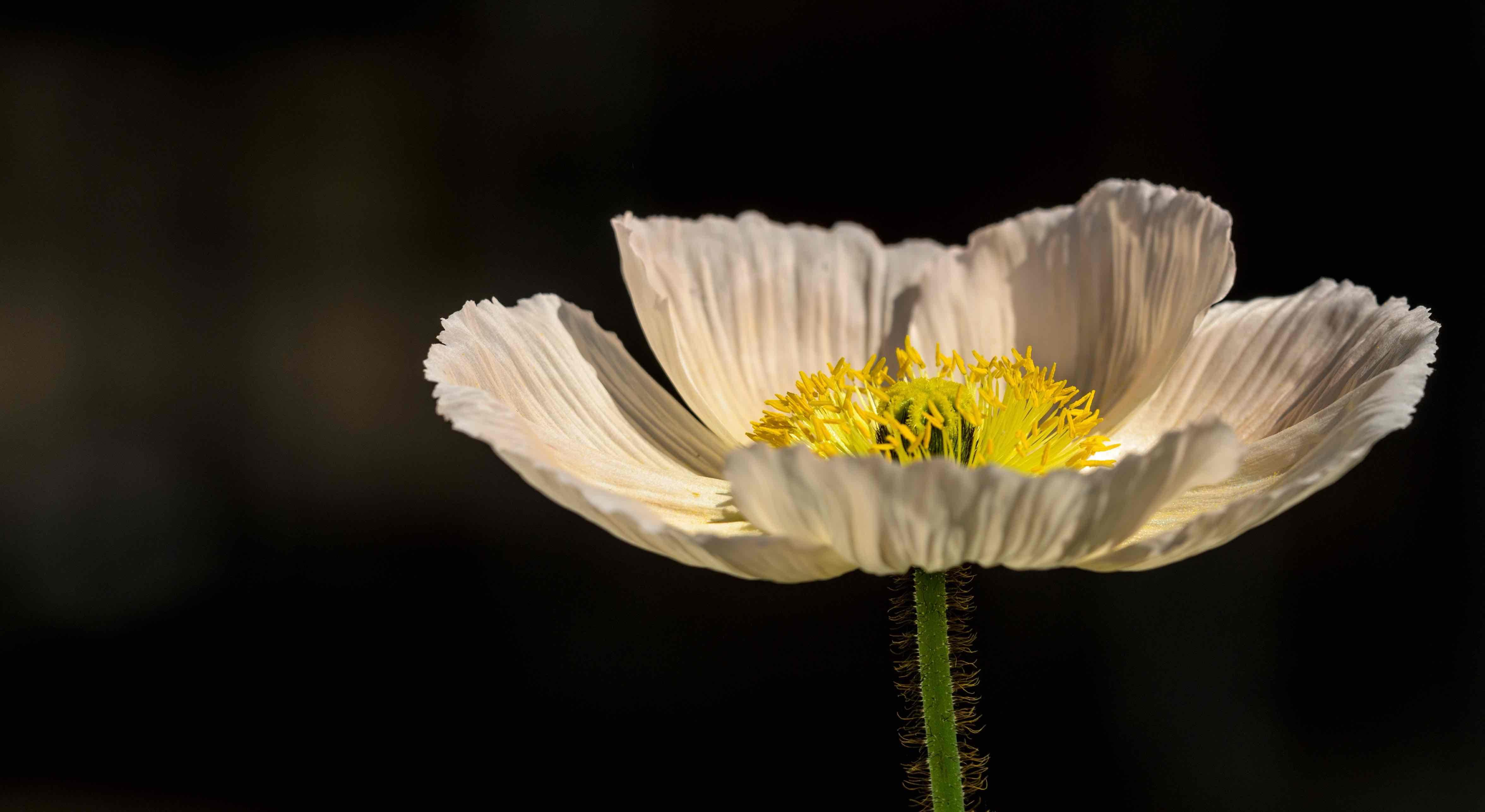 Imagenes muy lindas de flores3