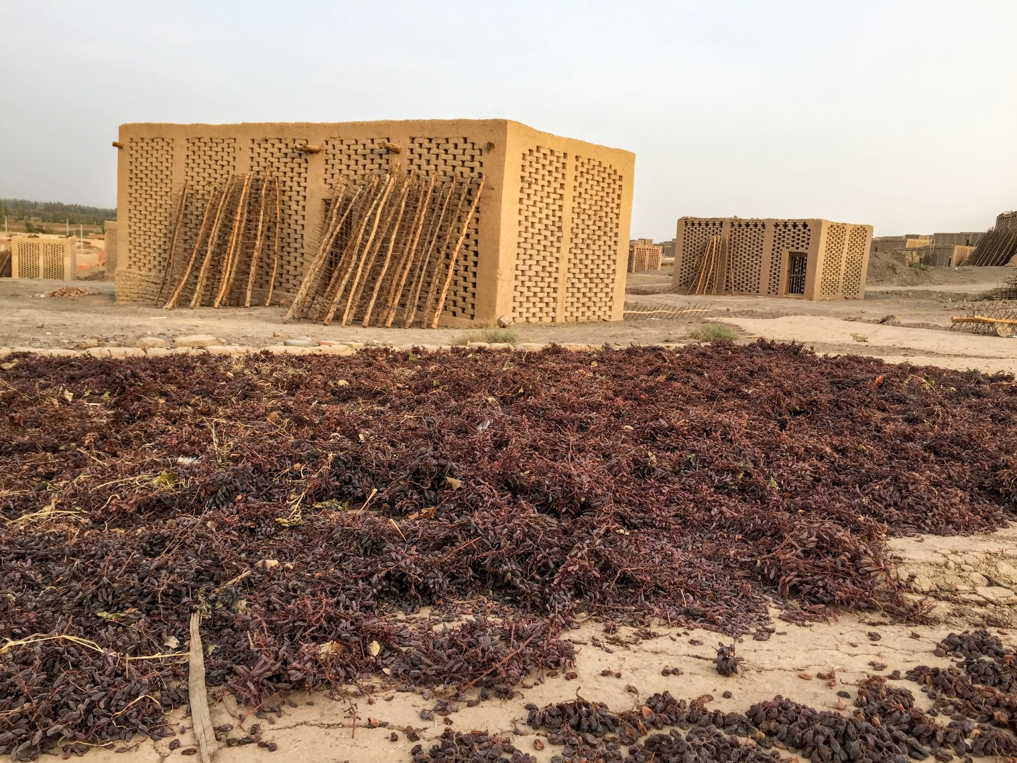 From Sweet Grapes To Dry Raisins In Turpan Ze Wandering