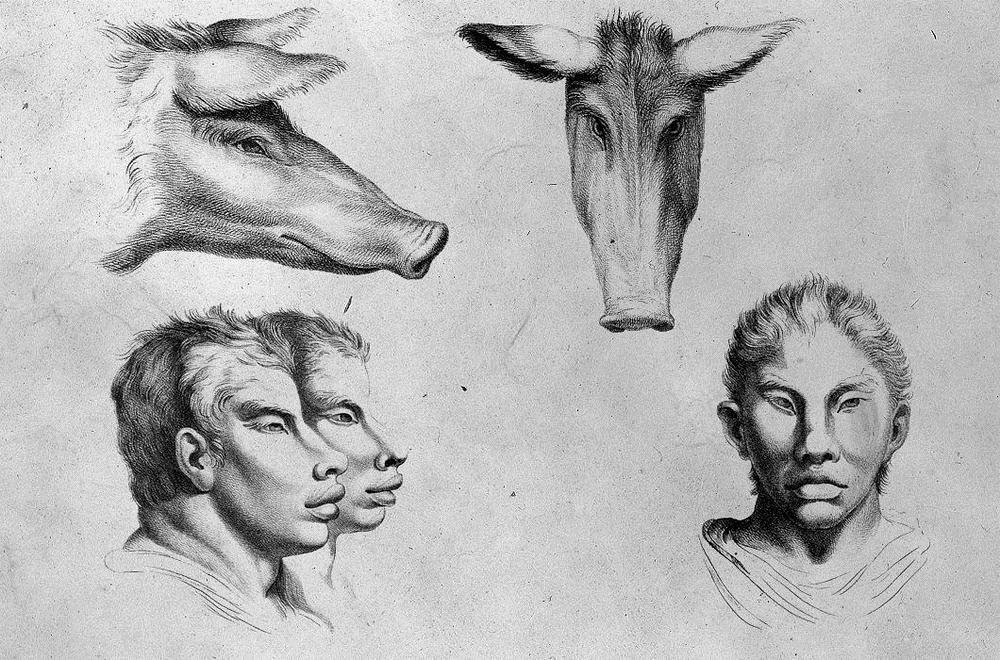 charles-le-brun-physiognomic-heads-7