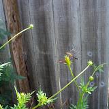 Gardening 2011 - 100_0116.JPG