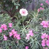 Gardening 2011 - IMG_20111019_185344.jpg