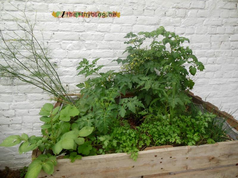 Incredible Edible @Itterbeek Brussels (July 2015)