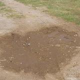 Divers lycènes mud-puddlant dont Polyommatus damon (DENIS & SCHIFFERMÜLLER, 1775) au premier plan. Villeneuve, 1000 m (Causse Méjean, Lozère), 10 août 2013. Photo : J.-M. Gayman