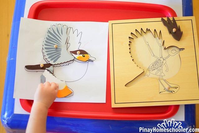 birdthemetotschool-2514