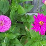 Gardening 2012 - 115_2404.JPG