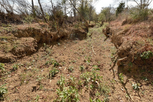 Dried creek bed of Hawks Branch in Woodville, Alabama. Photo: Bob Gathany / al.com