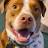 Billy Graham avatar image