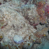 Bonaire 2011 - PICT0225.JPG