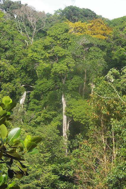 Piste de Coralie (Guyane). 28 novembre 2011. Photo : J.-M. Gayman (photo à placer au-dessus de la précédente)
