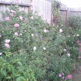 Gardening 2011 - IMG_20111019_185510.jpg