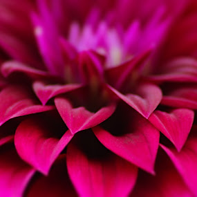 by Tanmoy Debnath - Nature Up Close Flowers - 2011-2013