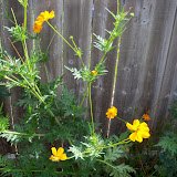 Gardening 2011 - 100_9988.JPG