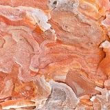 Red-Pine-Bark_MG_2932-copy.jpg