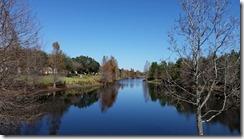 Neighborhood Pond
