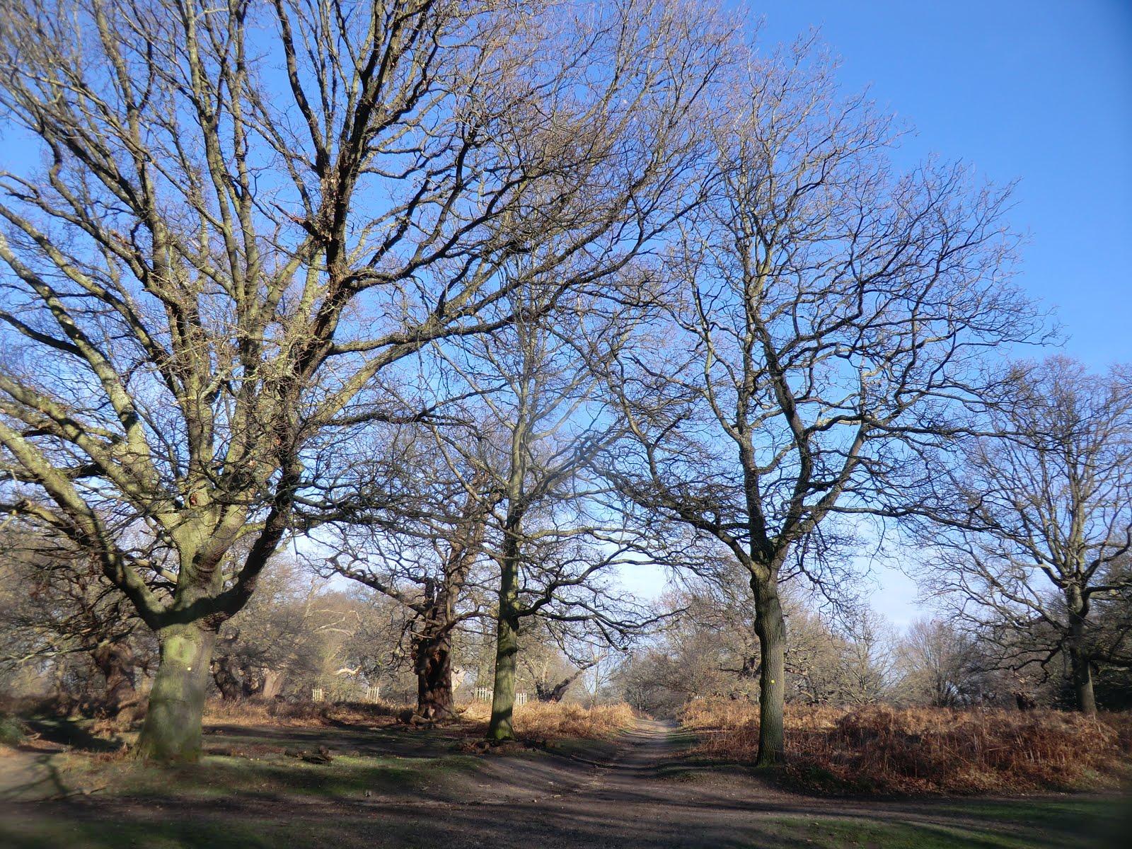 CIMG2248 Richmond Park in winter