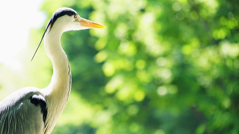 多摩動物公園 ペリカン 写真
