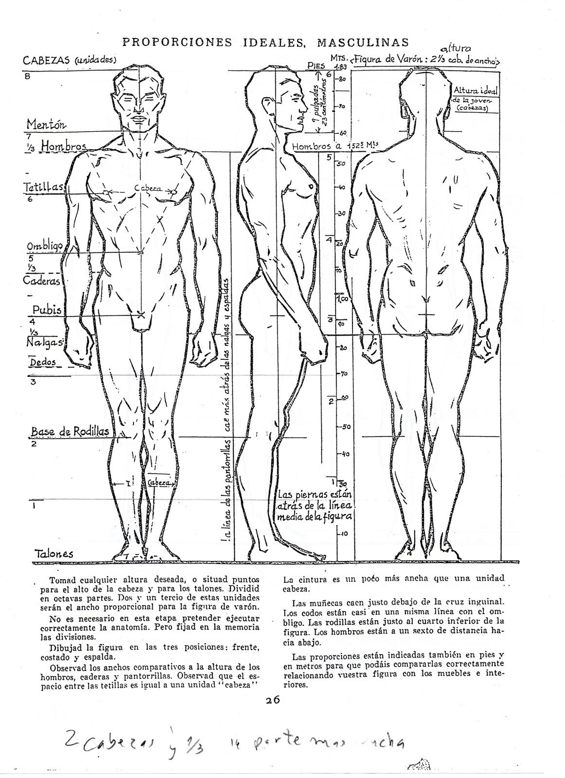 h1>DIBUJO ARTISTICO II </h1><h2>proporciones ideales del cuerpo ...