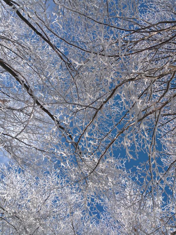 Privind in sus la copacii frumos impodobiti.