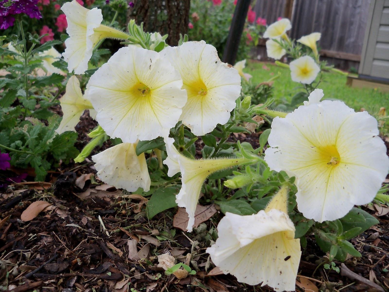 Gardening 2012 - 115_1386.JPG
