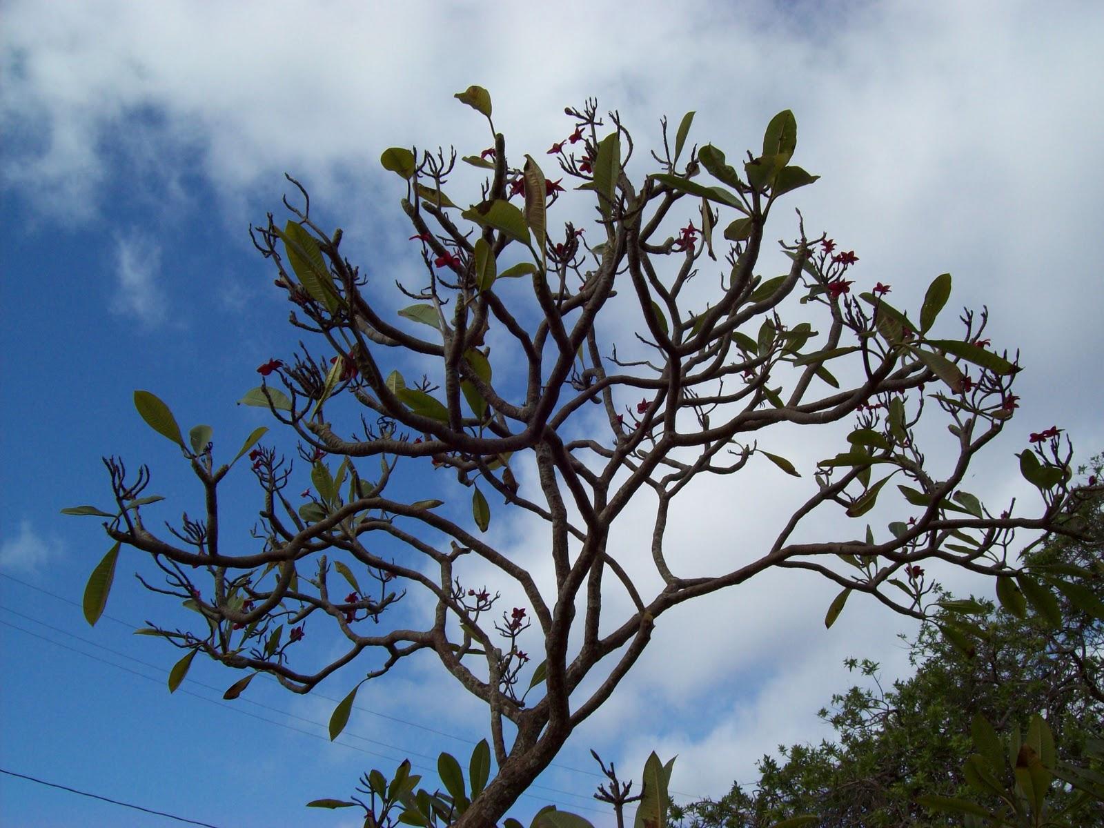 Hawaii Day 6 - 100_7640.JPG