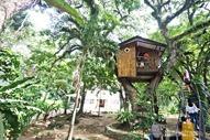 Zamboanga Tree House