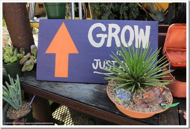 160322_Cambria_Grow_0006