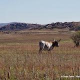 11-09-13 Wichita Mountains Wildlife Refuge - IMGP0400.JPG