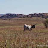 11-09-13 Wichita Mountains Wildlife Refuge - IMGP0400.JPG
