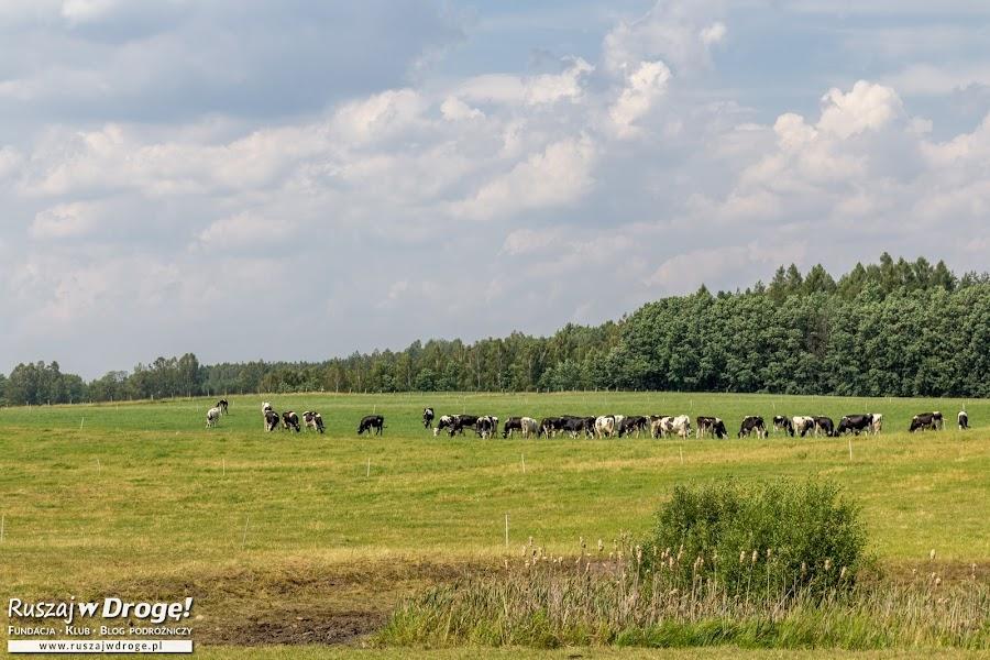 Zielona Warmia - w okolicach traktu biskupiego w Bałdach