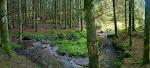 Verstecktes Lager in einem am Abend sehr rötlich schimmernden Waldstück.