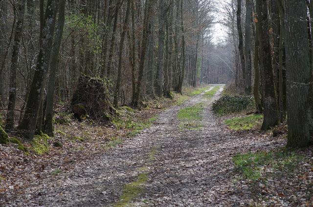 Forêt de Dreux. Les Hautes-Lisières (Rouvres, 28), 22 mars 2012. Photo : J.-M. Gayman