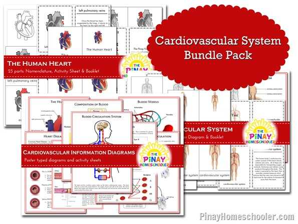 Cardiovascular System Learning PACK