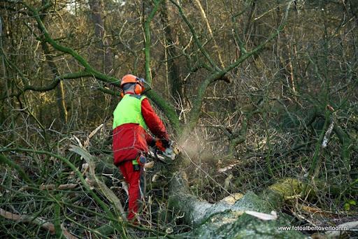 Houtoogst in de bossen van overloon 17-01-2012 (14).JPG