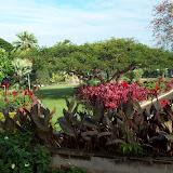 Hawaii Day 2 - 114_0918.JPG