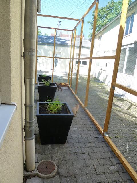 zeigt her eure gesicherten balkone ausl ufe gehege g rten terrassen seite 42 katzen. Black Bedroom Furniture Sets. Home Design Ideas