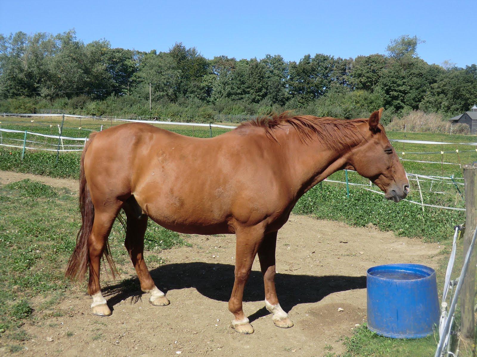 CIMG3891 Horse, Henley Street