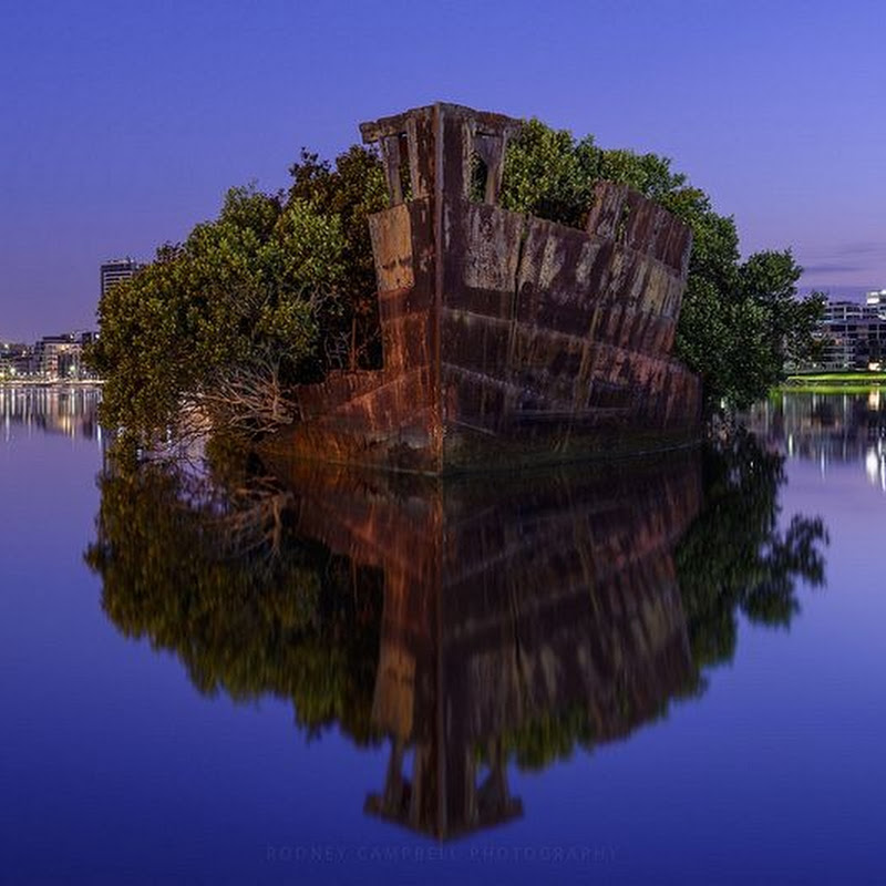 The Floating Forest of Homebush Bay, Sydney